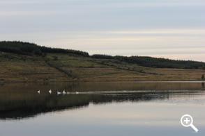 Trusk Lough 4