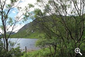 Glenveagh Woodland 2