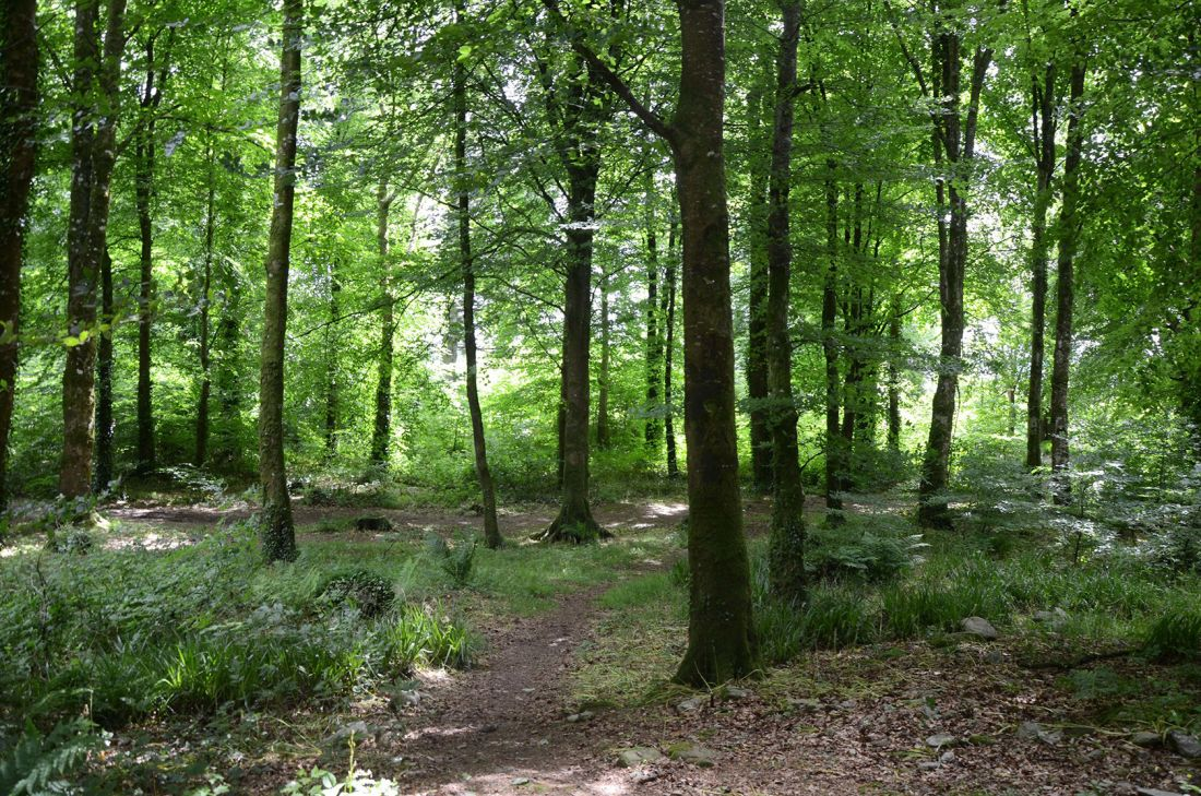 Drumboe Woods and The Salmon Leap 2