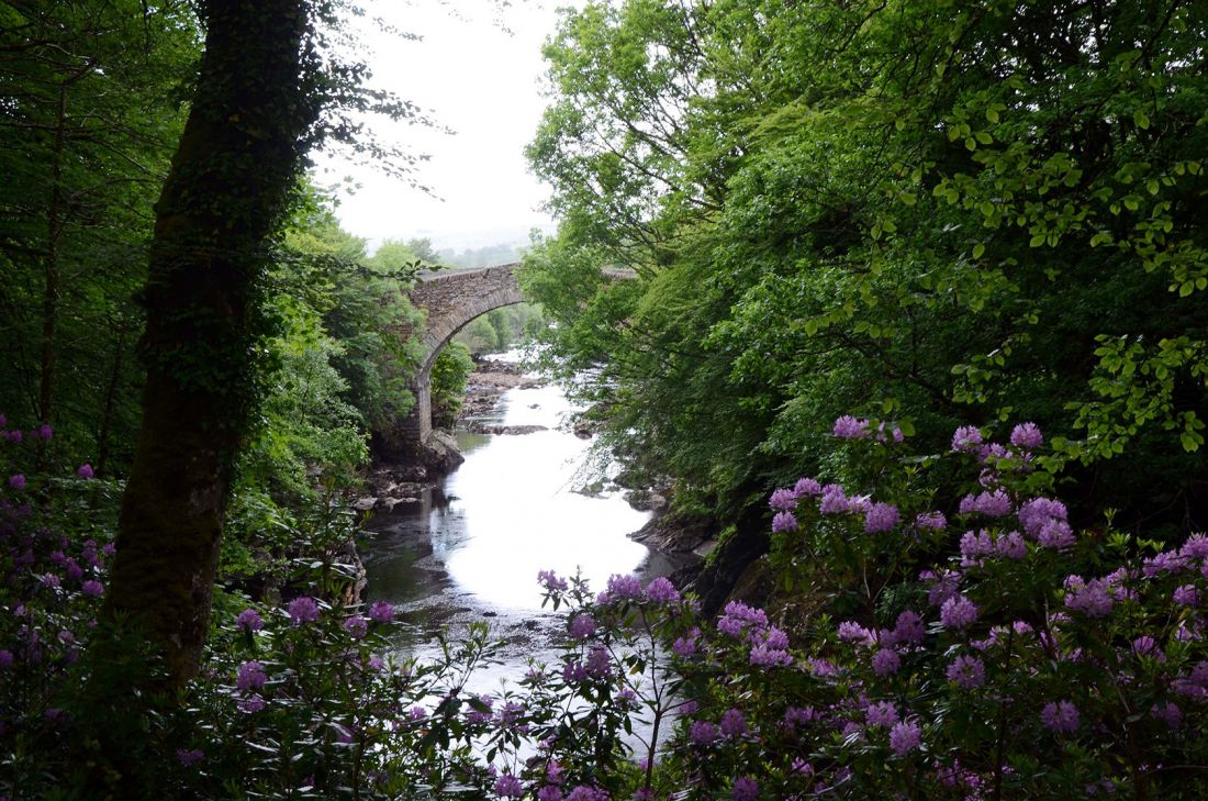 Drumboe Woods and The Salmon Leap 3