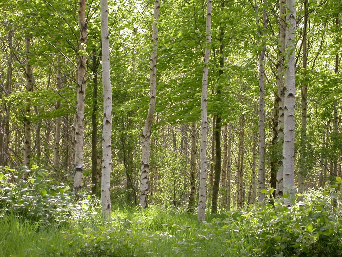 Carnowen Plantation 4
