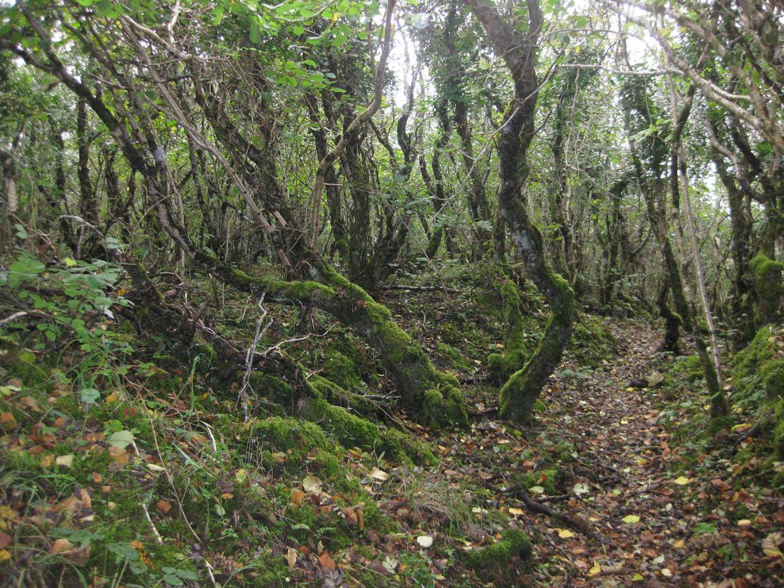 Ards Forest 2