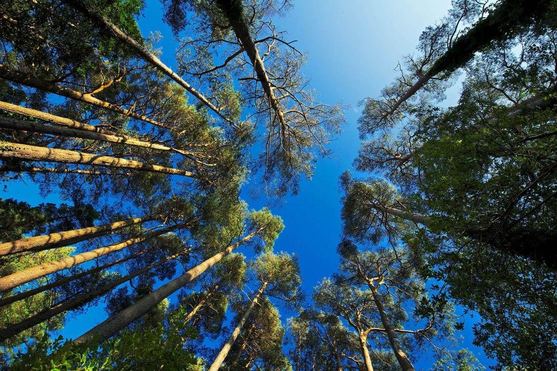 Glenveagh Woodland 4