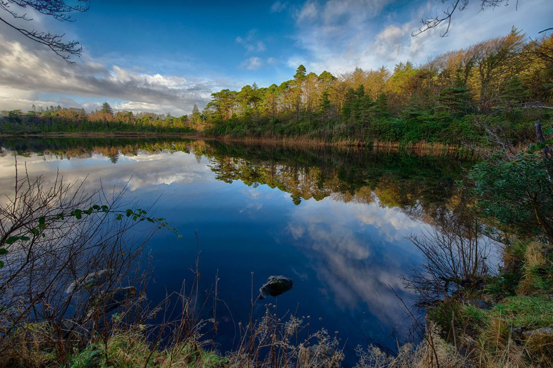Ards Forest 1