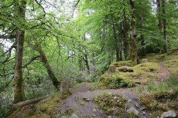 Drumboe Woods and The Salmon Leap 1