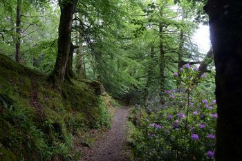 Drumboe Woods and The Salmon Leap 4