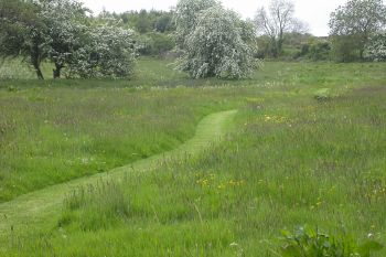 Carnowen Plantation 2