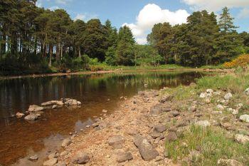 Glenveagh Woodland 1