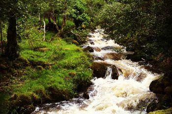 Glenveagh Woodland 3
