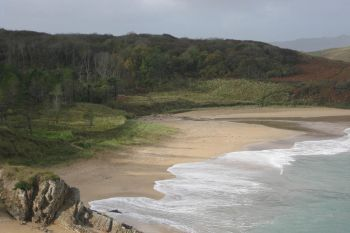 Ards Forest 4 Ards Friary Beach