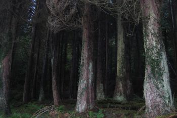 Ards Forest 3